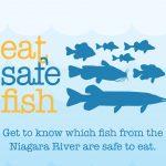 Eat Safe Fish booklet